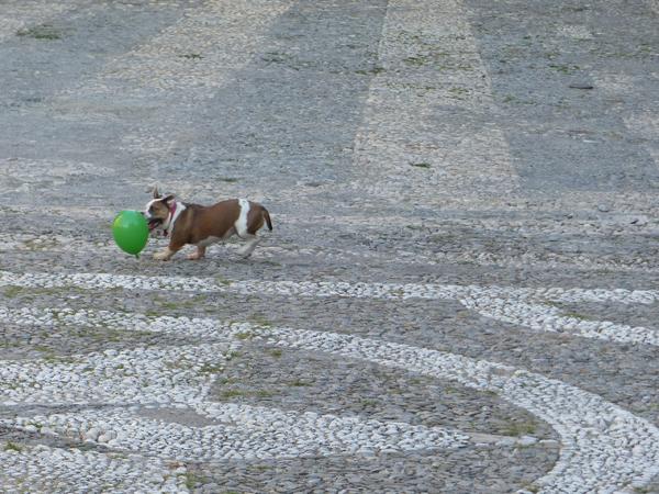chien au ballon vert