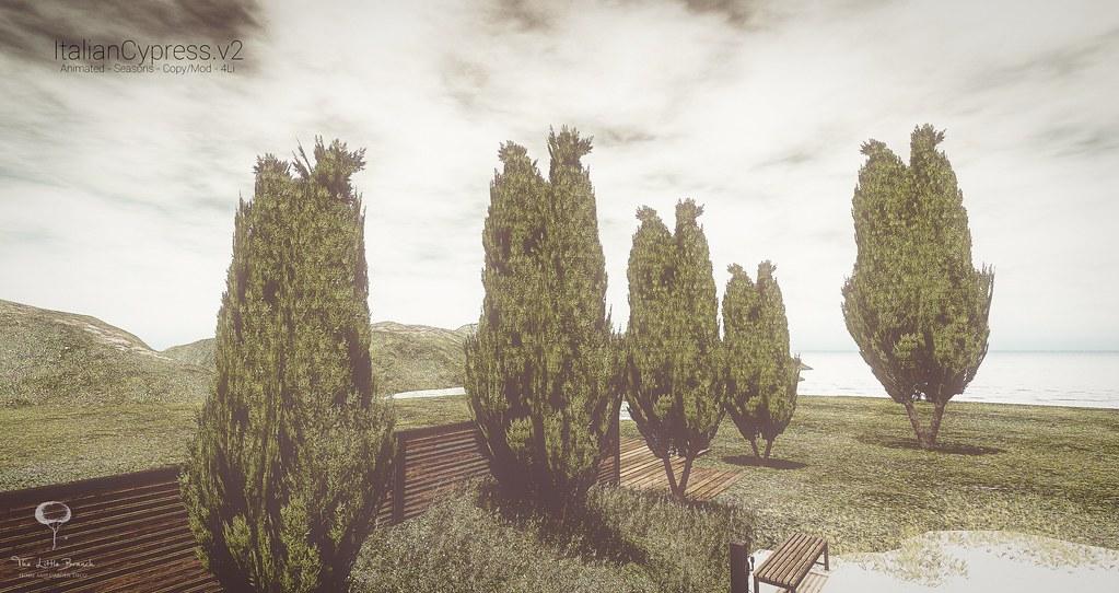 Little Branch Italian Cypress v2