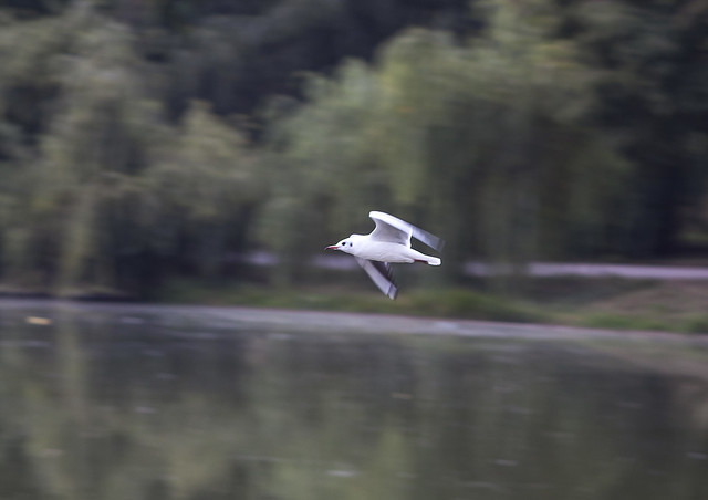 Fly of the seagull