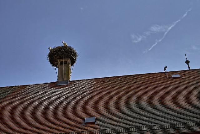 Die Störche auf dem Dach
