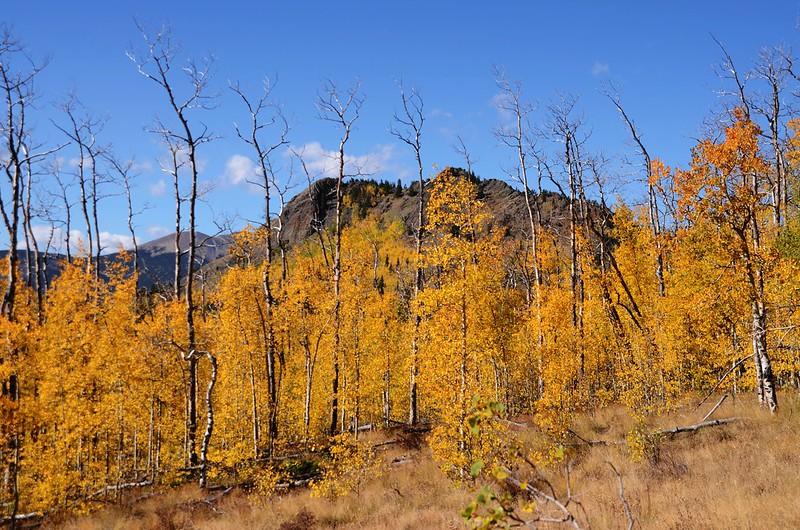 Jefferson Hill, Colorado Trail, Kenosha Pass (29)