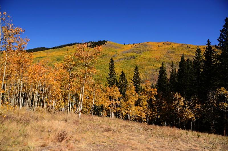 Fall Foliage in Kenosha Pass, Colorado (47)