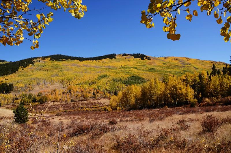 Fall Foliage in Kenosha Pass, Colorado (35)