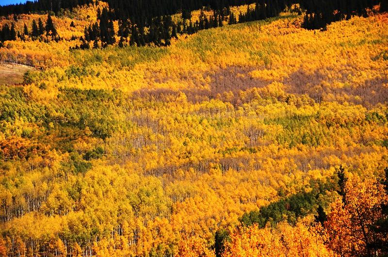 Fall Foliage in Kenosha Pass, Colorado (20)