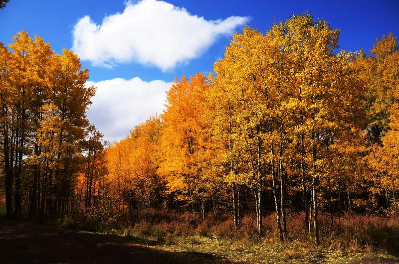 Fall foliage hike at Colorado Trail, Kenosha Pass (3)