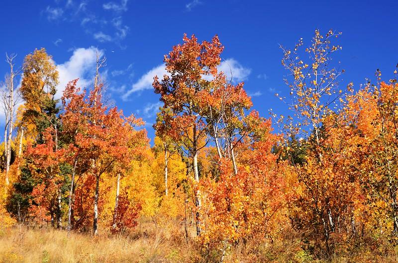 Fall foliage hike at Colorado Trail, Kenosha Pass  (126)