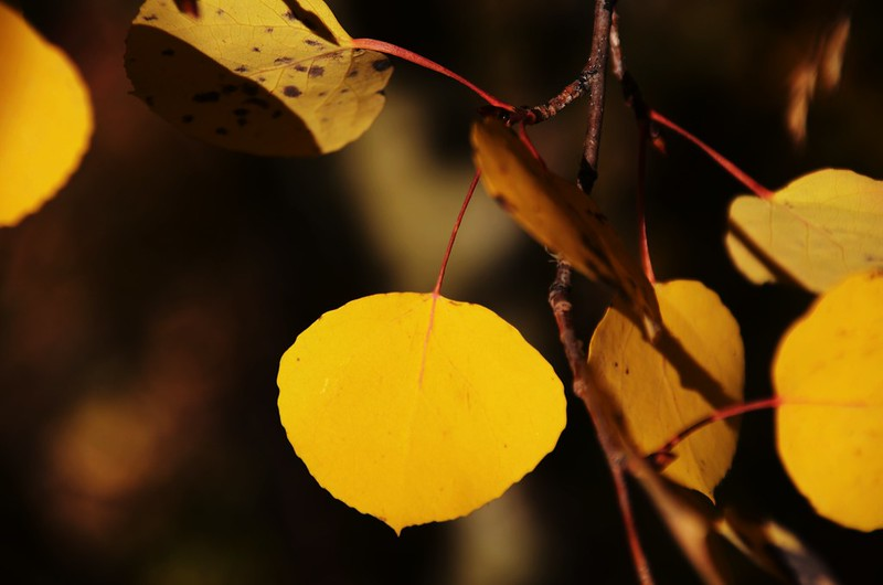 Fall foliage hike at Colorado Trail, Kenosha Pass  (118)
