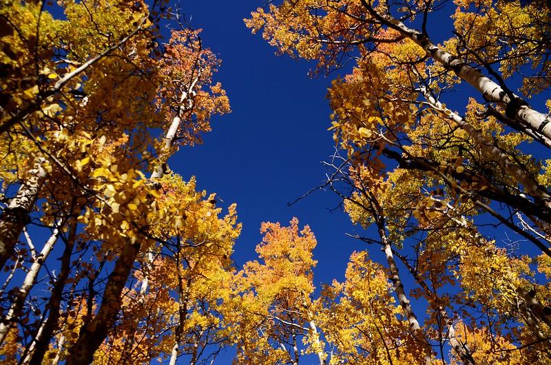 Fall foliage hike at Colorado Trail, Kenosha Pass  (108)