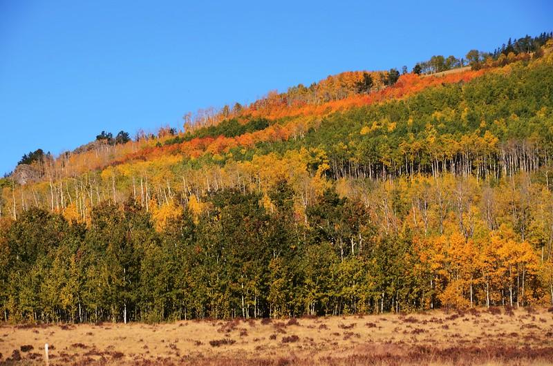 Fall foliage hike at Colorado Trail, Kenosha Pass  (76)