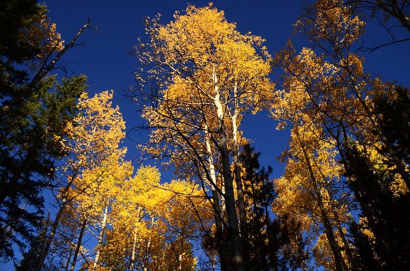 Fall foliage hike at Colorado Trail, Kenosha Pass  (9)