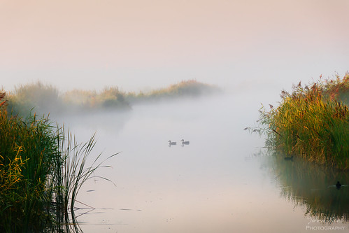 mist groundmist fog water watercourse serenity reed landscape waterscape outdoors nopeople early morning sunrise purmerland waterland netherlands nikon d7500 bird duck creek reflection bestcapturesaoi elitegalleryaoi aoi