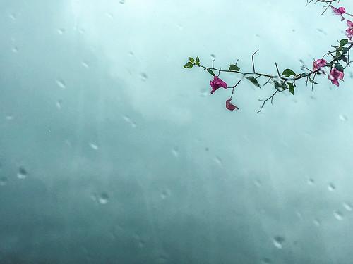 sylhetsadarupazila sylhetdivision bangladesh window flower rain challengegamewinner