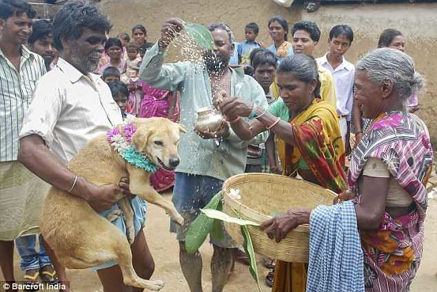 5371 An 18-years-old girl marries a stray dog in India 04