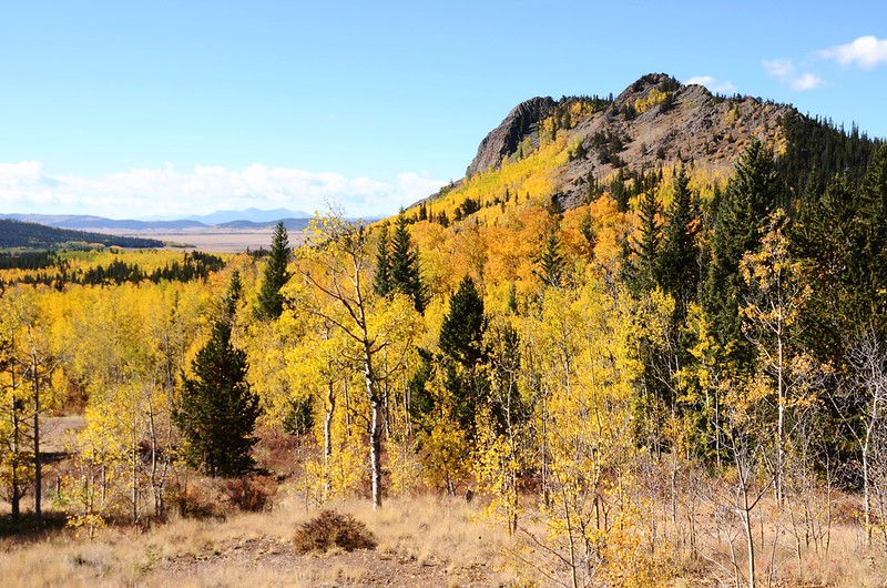 Jefferson Hill, Colorado Trail, Kenosha Pass (21)