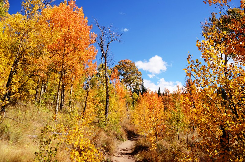 Fall foliage hike at Colorado Trail, Kenosha Pass (10)