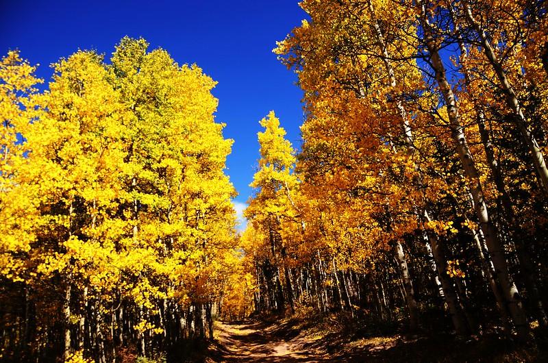 Fall foliage hike at Colorado Trail, Kenosha Pass (5)