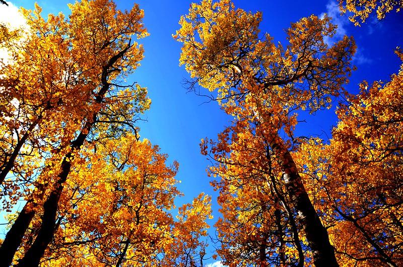 Fall foliage hike at Colorado Trail, Kenosha Pass (2)