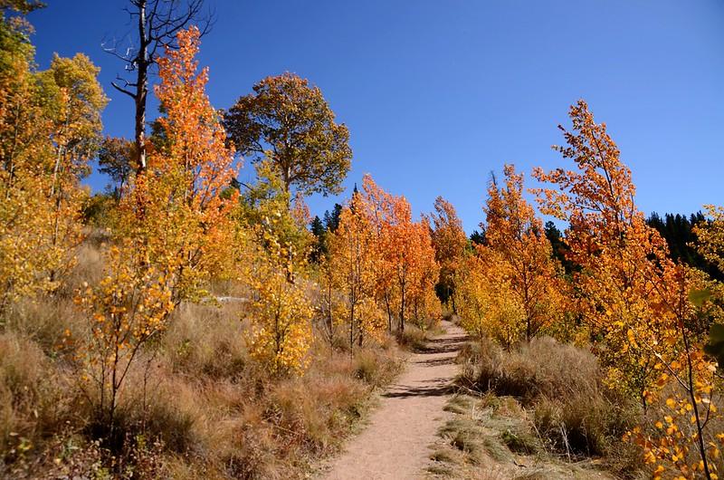 Fall foliage hike at Colorado Trail, Kenosha Pass  (229)