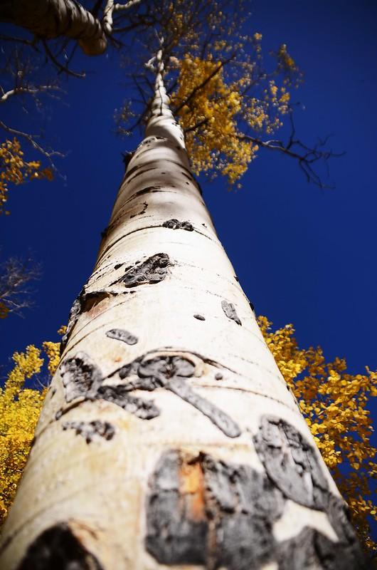 Fall foliage hike at Colorado Trail, Kenosha Pass  (151)