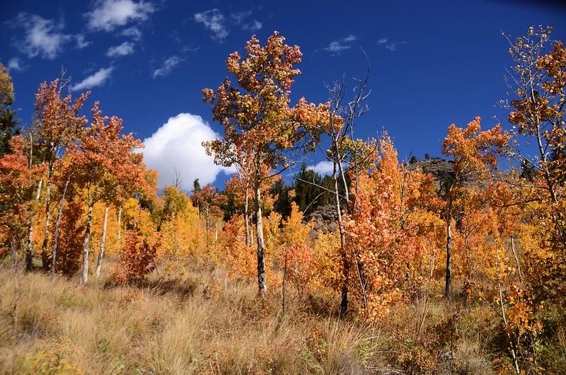 Fall foliage hike at Colorado Trail, Kenosha Pass  (145)