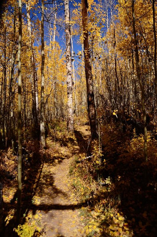 Fall foliage hike at Colorado Trail, Kenosha Pass  (114)