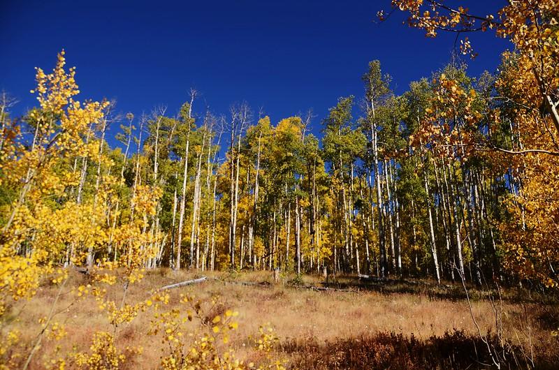 Fall foliage hike at Colorado Trail, Kenosha Pass  (100)
