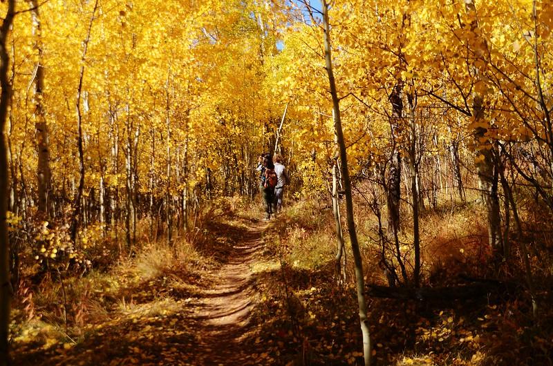 Fall foliage hike at Colorado Trail, Kenosha Pass  (99)