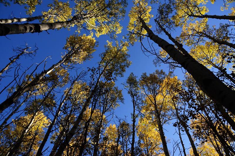 Fall foliage hike at Colorado Trail, Kenosha Pass  (27)