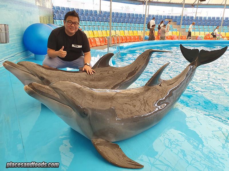phuket dolphin bay