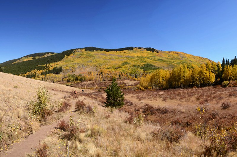 Fall Foliage in Kenosha Pass, Colorado (49)