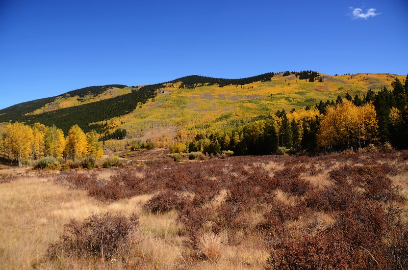 Fall Foliage in Kenosha Pass, Colorado (25)