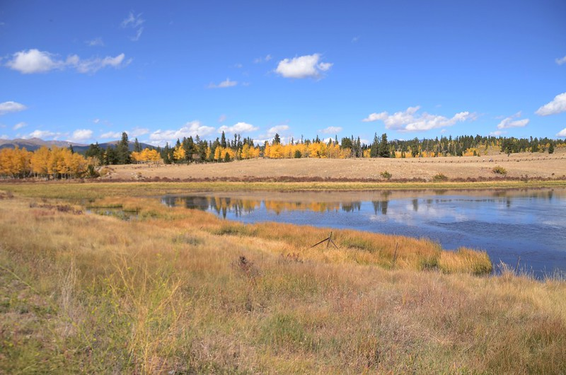 Fall Foliage in Kenosha Pass, Colorado  (2)