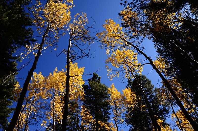Fall foliage hike at Colorado Trail, Kenosha Pass  (242)