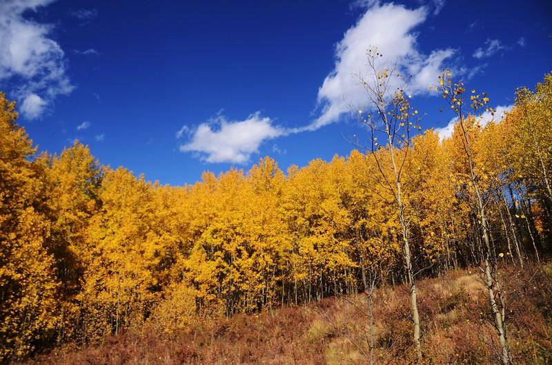 Fall foliage hike at Colorado Trail, Kenosha Pass  (175)