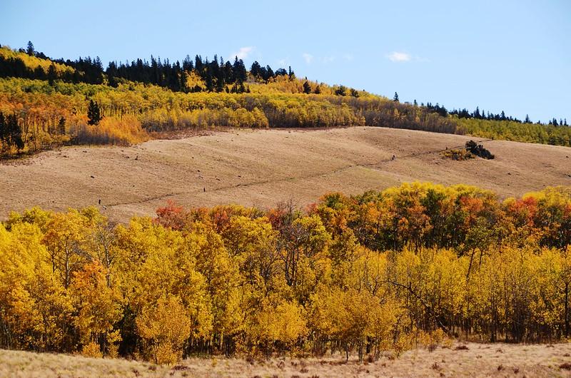 Fall foliage hike at Colorado Trail, Kenosha Pass  (165)