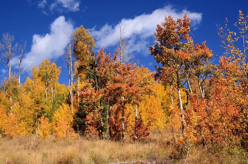 Fall foliage hike at Colorado Trail, Kenosha Pass  (124)