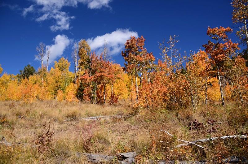 Fall foliage hike at Colorado Trail, Kenosha Pass  (123)