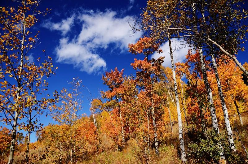 Fall foliage hike at Colorado Trail, Kenosha Pass  (122)