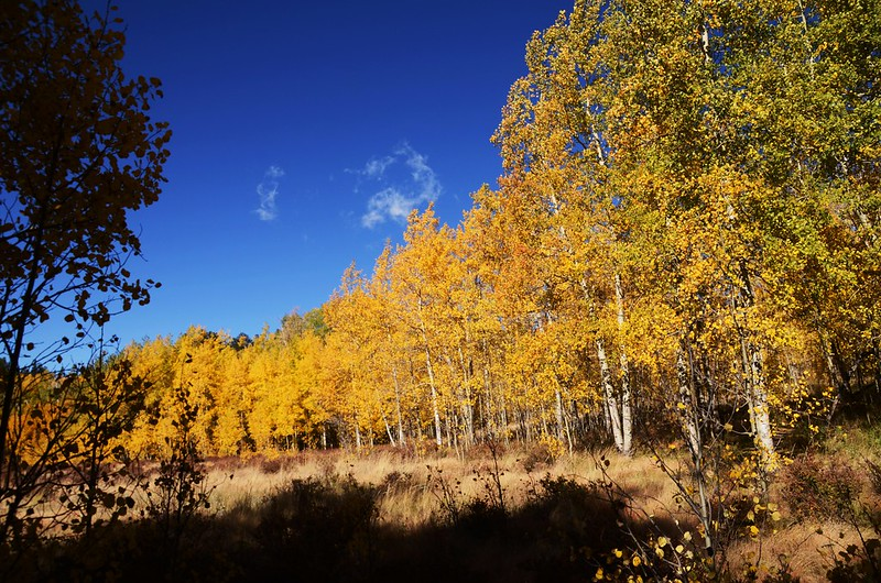 Fall foliage hike at Colorado Trail, Kenosha Pass  (89)