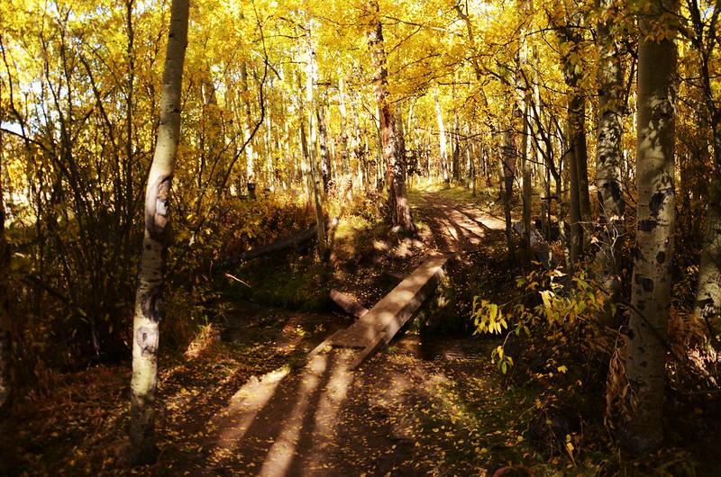 Fall foliage hike at Colorado Trail, Kenosha Pass  (66)