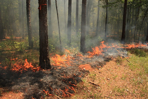 Prescribed Burn | by Alabama Extension