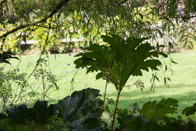 Bog Garden, Walled Garden, Moreton