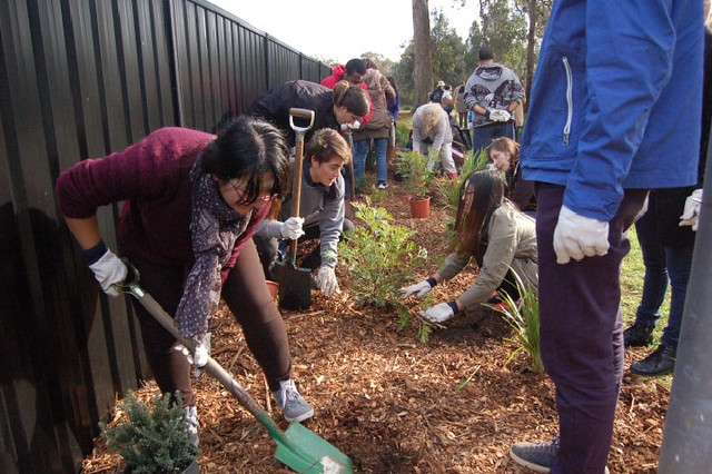 Australia-2015-06-13-Australian Youth Plant Trees as RYS Project