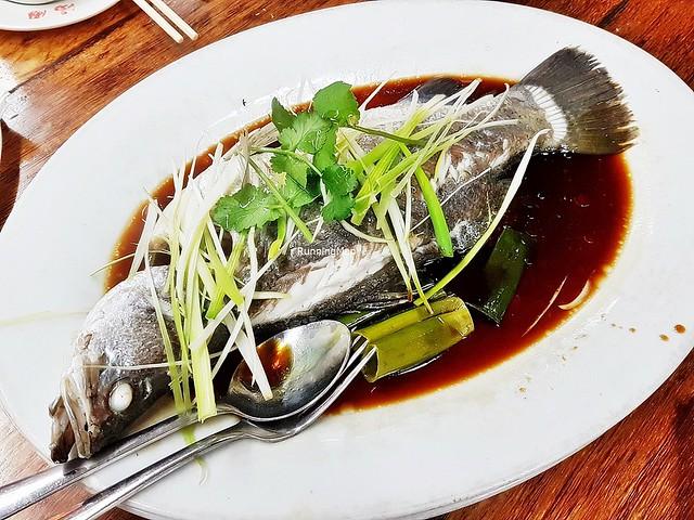 Steamed Barramundi Fish In Hong Kong Superior Soy Sauce