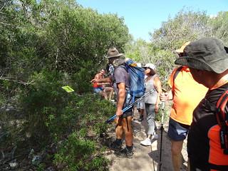 Dernier arrêt botanique avant la traversée du Cavu