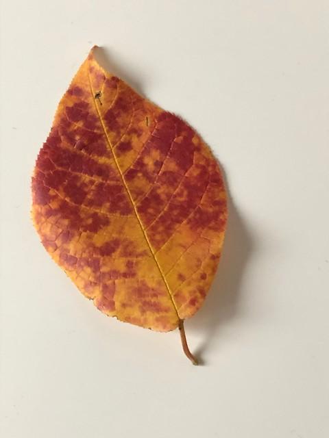 Autumn starts