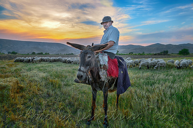 Στα βοσκοτόπια Ζάρκου-Φαρκαδόνας  In the Zarko's-Farkadona's pastures