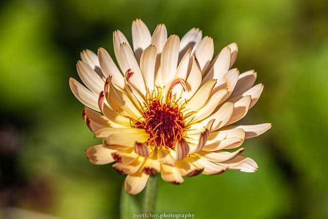 Lovely September Flower 2019 VII