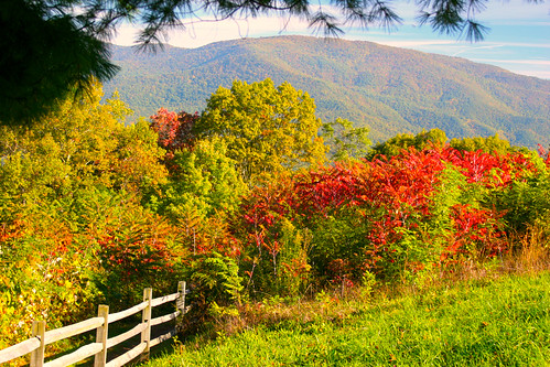 flora leaf foliage colorful mountain hill fall autumn tree shrub fence landscape nature