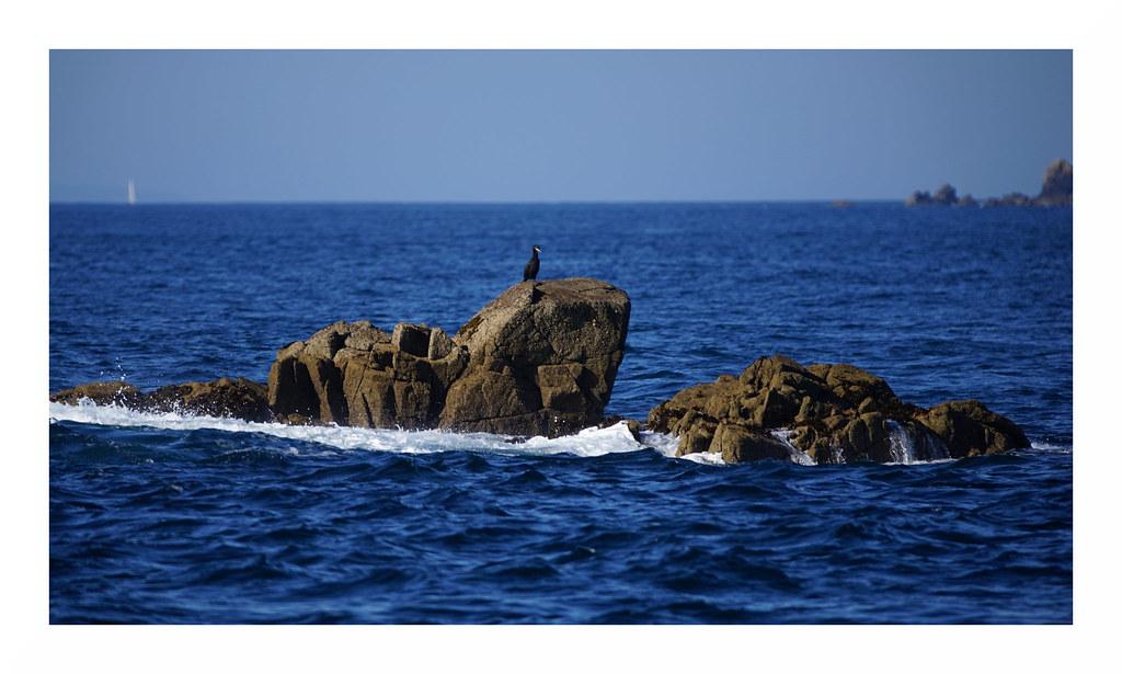 Kormoran Sept-Îles